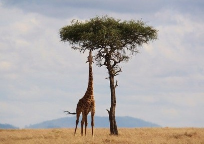 Best Time To Visit Kenya (for Safari & Wildebeest Migration)