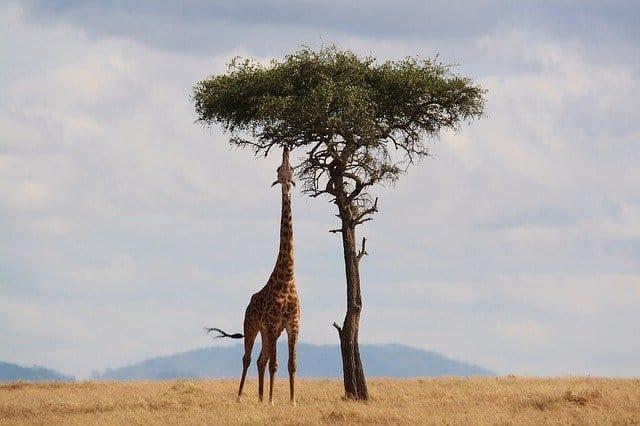 Best Time To Visit Kenya (for Safari & Wildebeest Migration)