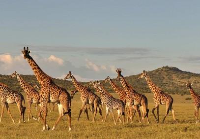 5-Day Tanzania Camping Safari