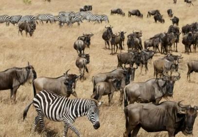 13 Days Adventurous Kenya-Tanzania Budget Camping Safari