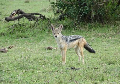 Wildlife 3177194 1920