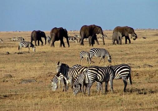 Wildlife Mara
