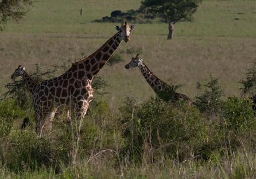 718249kidepovalleyugandaholidayskidepovalleynationalparkugandaeastafricaafrica