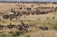 9-Day Great Rift Valley Safari
