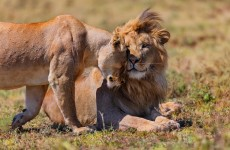 6-Day African Wildlife Encounters