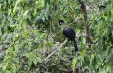 Tarangire National Park Day Trip