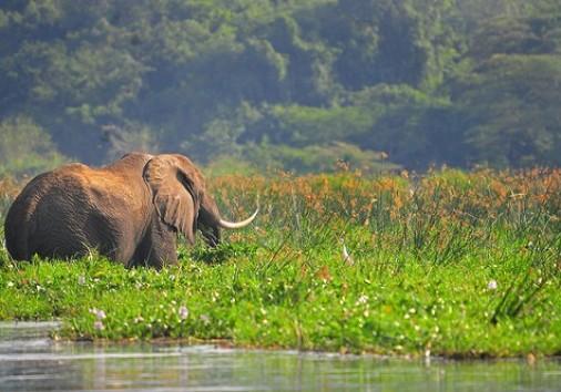 Elephant Mfnp