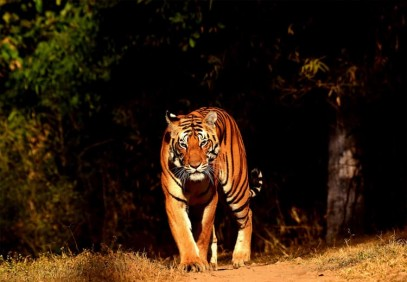 Rajasthan Bandhavgarh Wildlife and Royal Bengal Tiger Safari