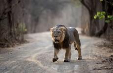 Gujarat Wildlife Safari Experience