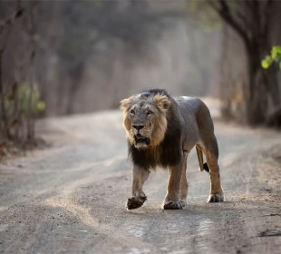 Gujarat Wildlife Safari Experience