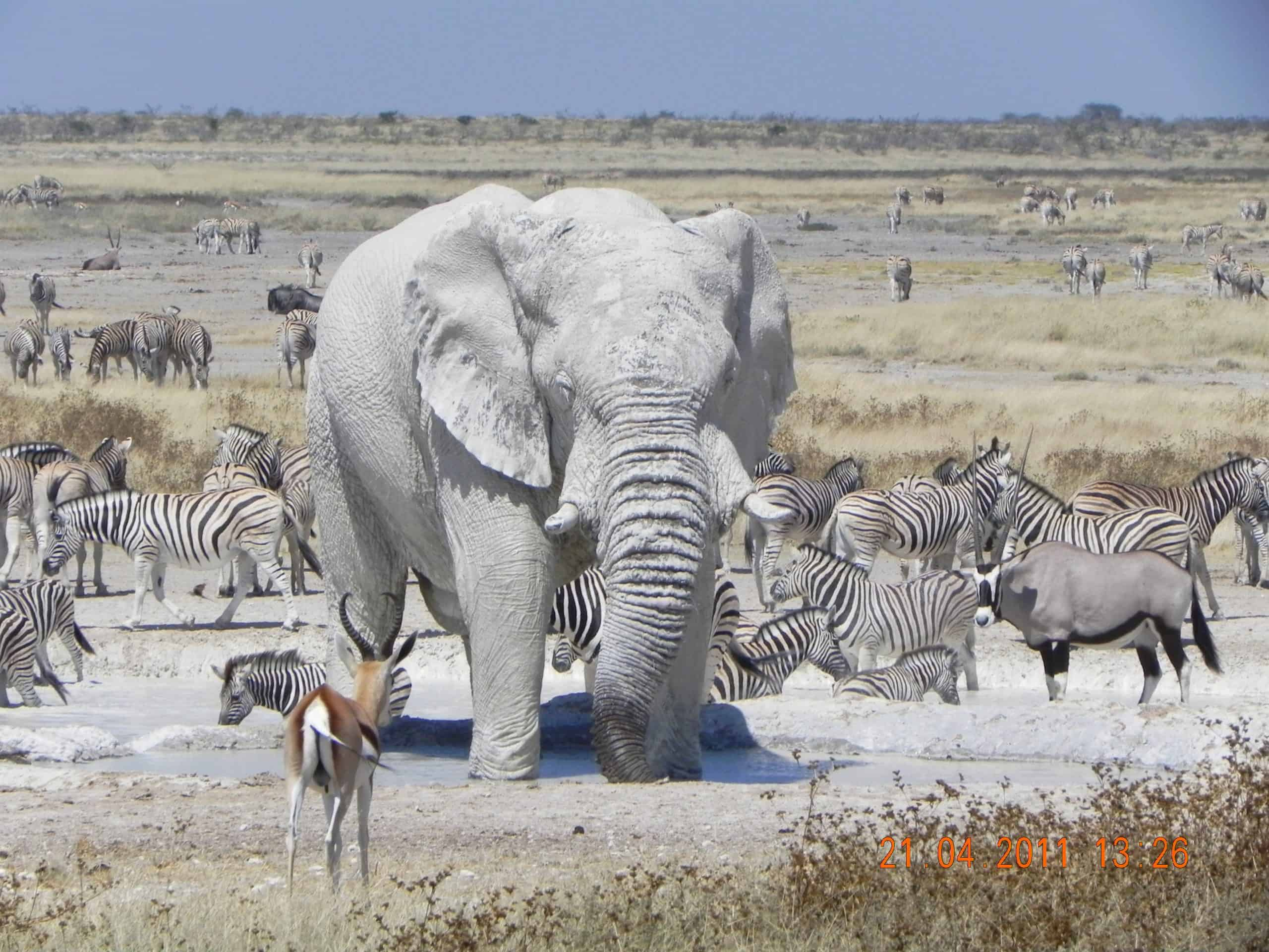 Game Viewing In Etosha National Park 1