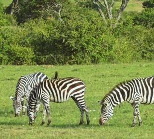 12-Day Kenya & Tanzania Camping Safari