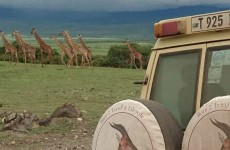 7-Day Classic Luxury Safari