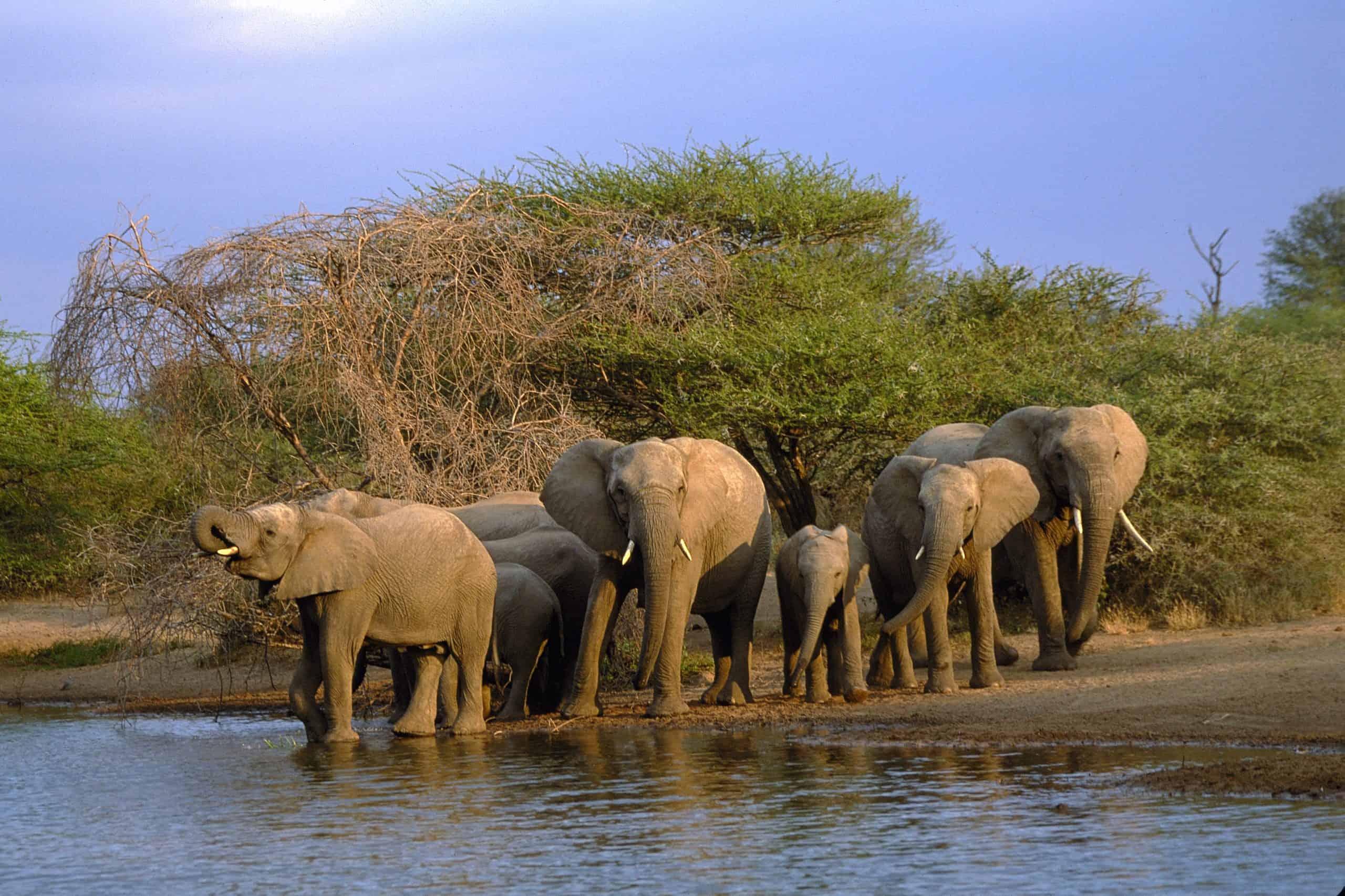 Kruger National