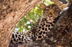3-Day Tanzania Game Viewing Safari