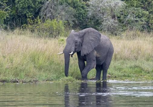 Murchison Falls 020