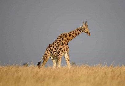 3-Day Murchison Falls Safari