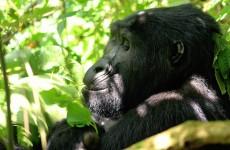4-Day Gorilla Trekking Safari