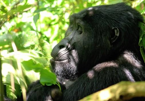 Primate World Safaris Cover Photo