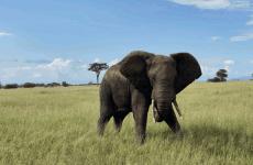 Tanzania Big 5 Safari