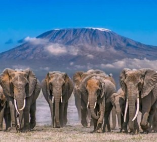 4-Day Luxury Elephant Trail Safari