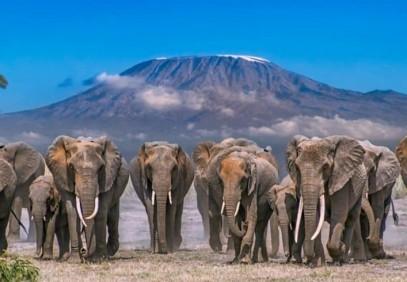 4-Day Luxury Elephant Trail Safari