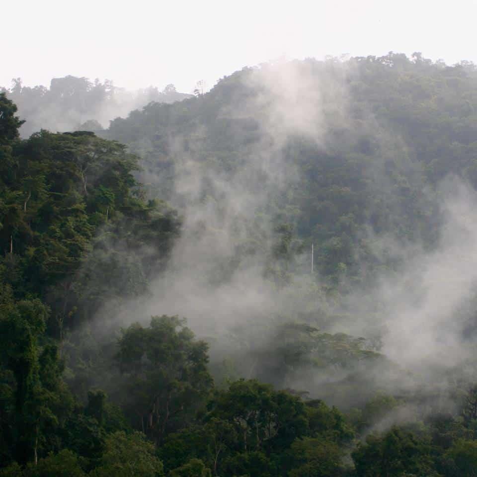 Bwindi Forest2