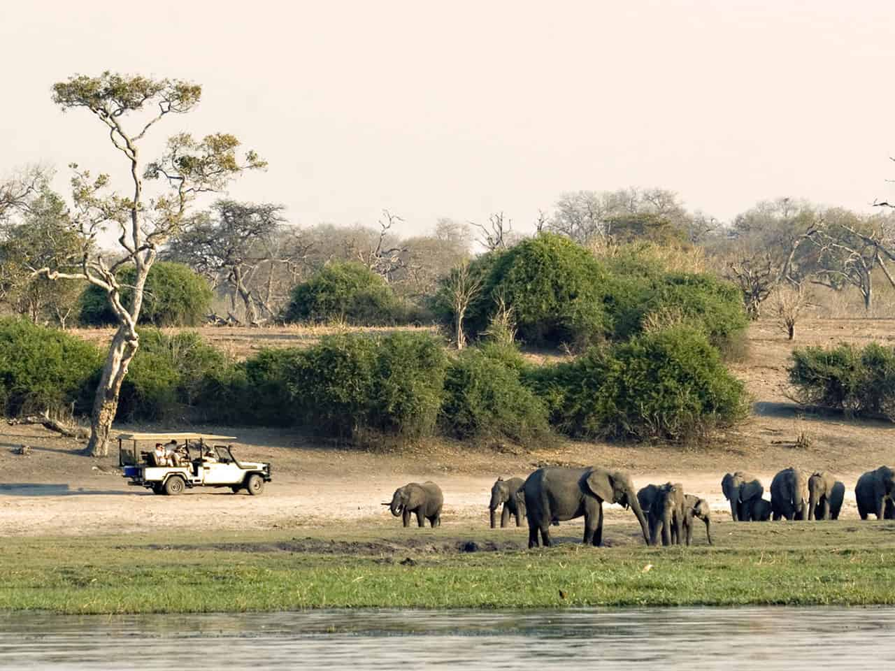 Chobe National Park Slideshow Image 5d5bc69e5c258
