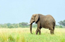 3-Day Masai Mara Camping Safari