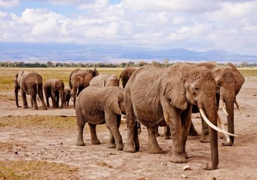 Elephants 458990 1920