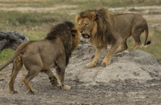 8-Day Kenya Wildlife Experience