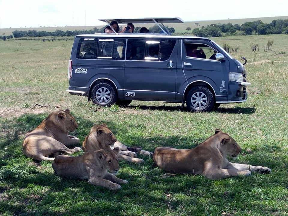9-Day Masai Mara & Serengeti Camping Safari