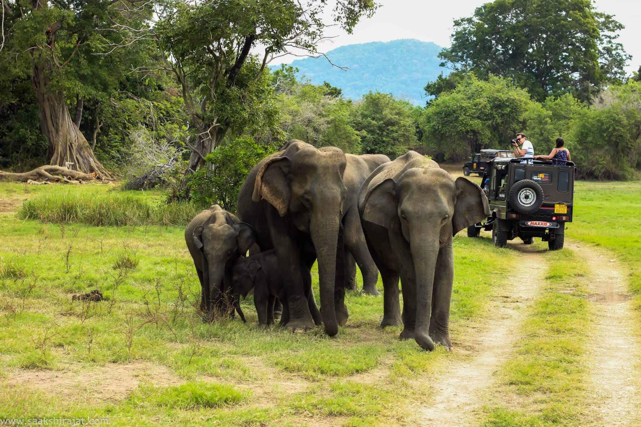 Kaziranga National Park 7