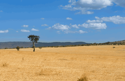 Best Time to Visit the Masai Mara National Park
