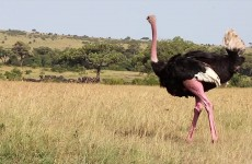8-Day Fantastic Kenyan Safari