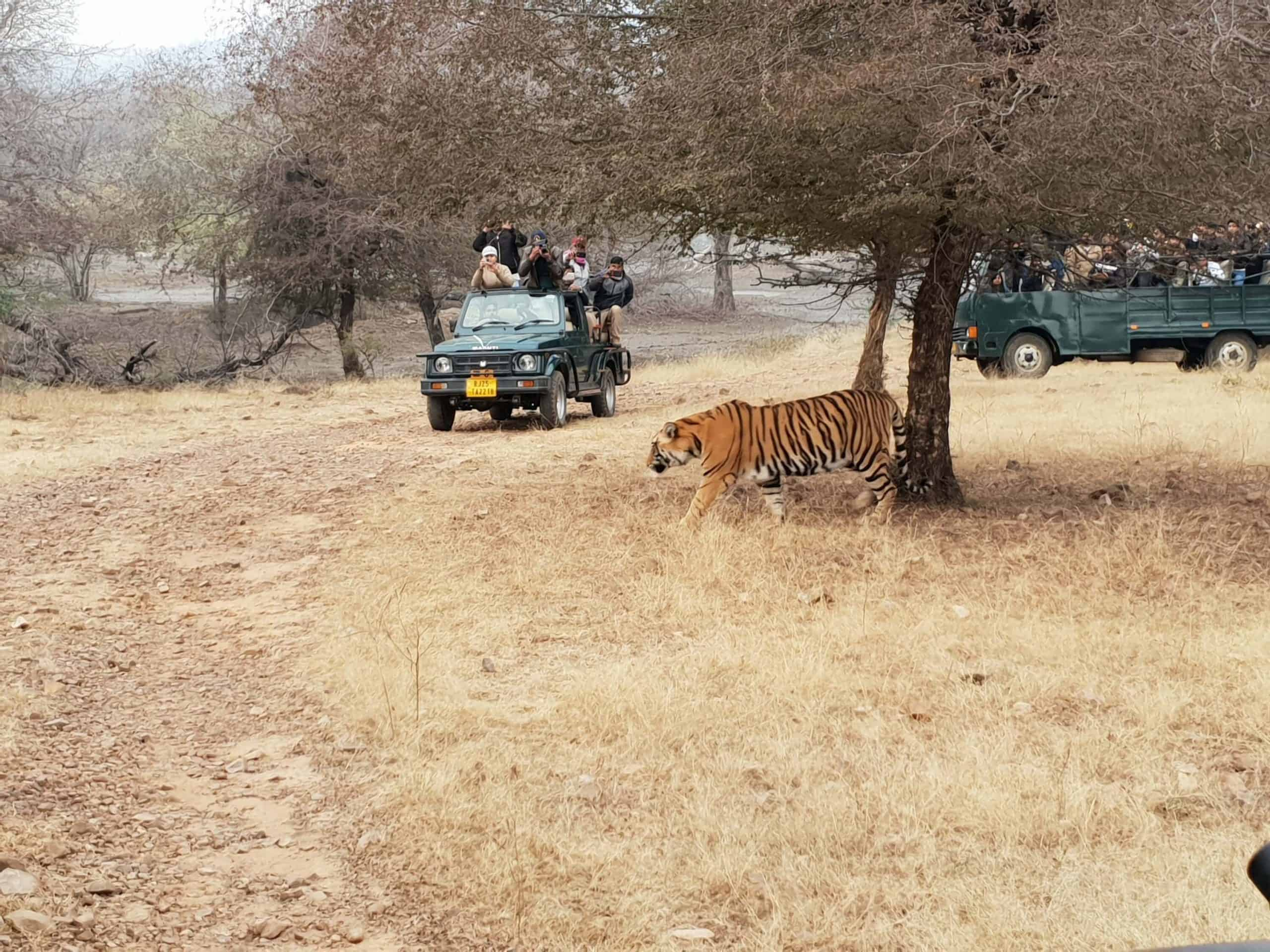 Ranthambore Jungle Safari India 2