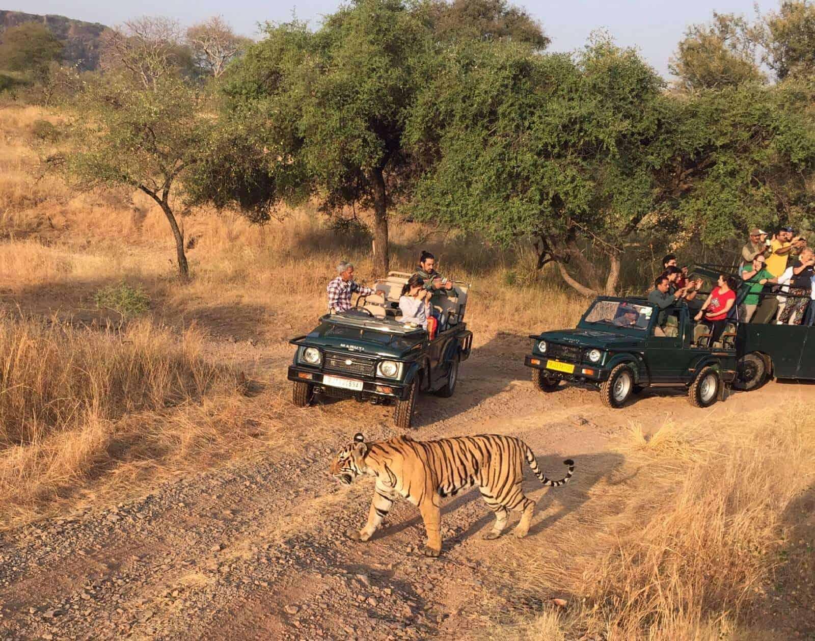 Ranthambore Jungle Safari India 3