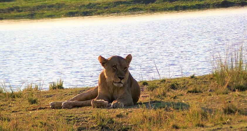 Safari Deal Botswana Safari Places Chobe