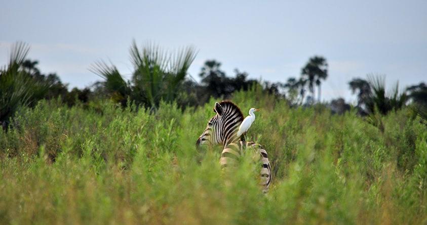 Safari Deal Botswana Safari Places Moremi
