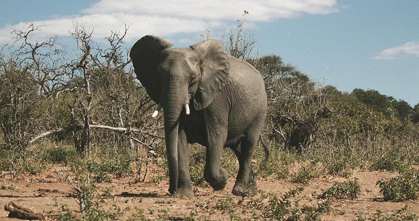 Safari Deal Botswana Safari Places Savuti