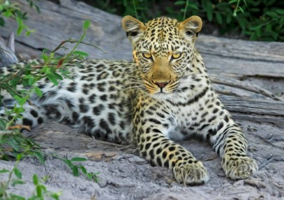 The Top 5 Places You Should Experience When You Visit Botswana