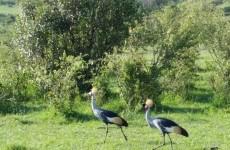 Lake Nakuru & Masai Mara Safari