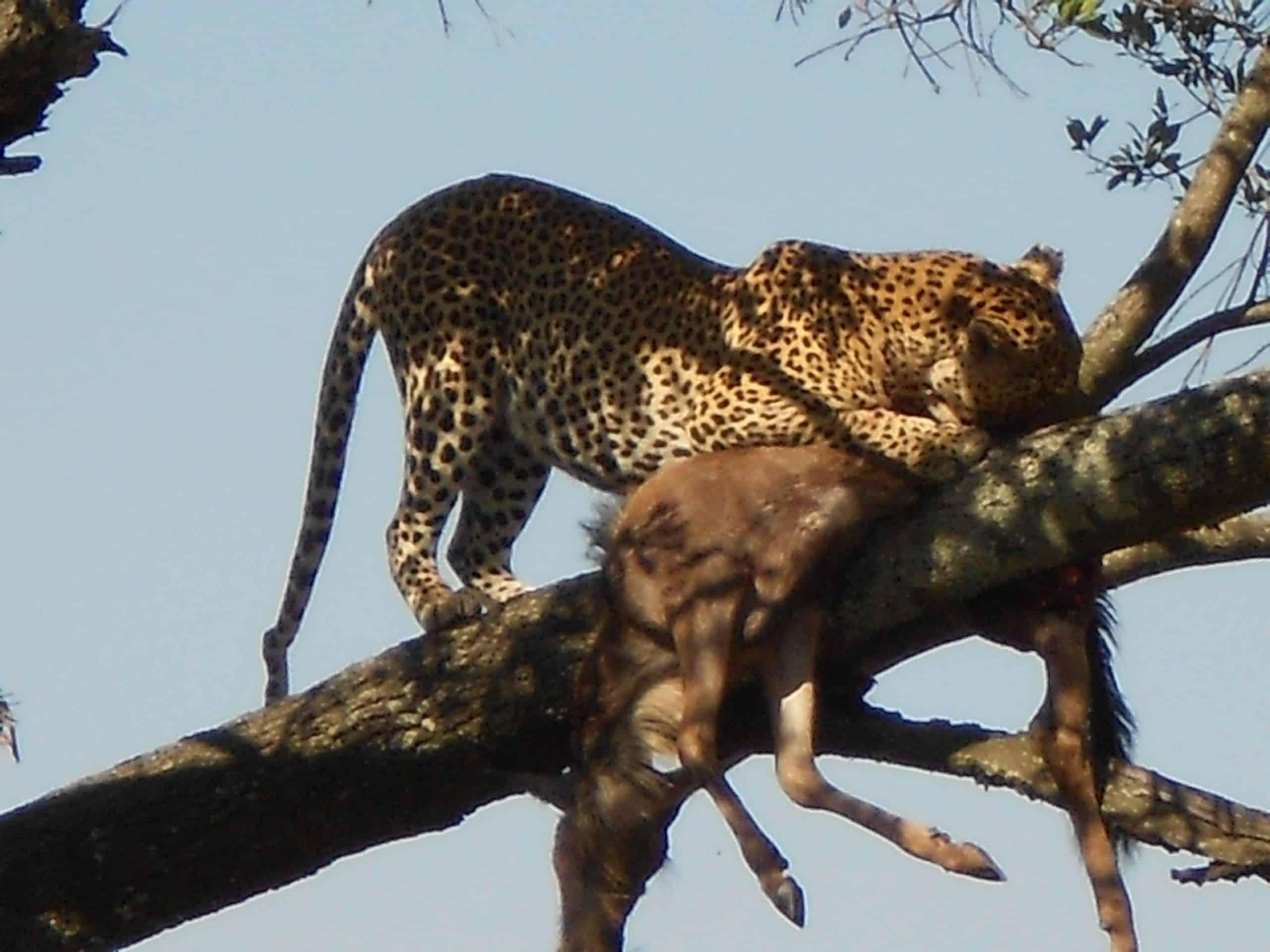 6 Day Tanzania Classic Safari #3