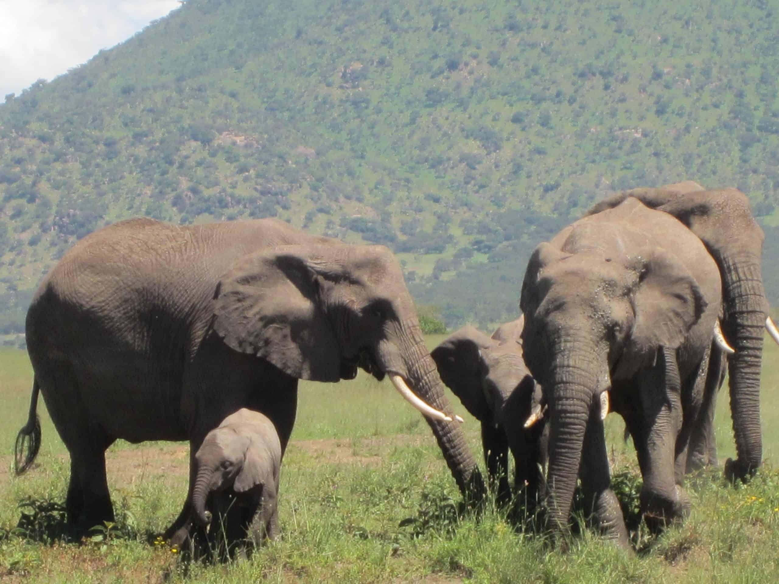 7 Day Luxury Tanzania Safari #1