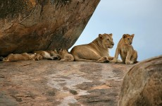 6-Day Serengeti Tented Camp Safari