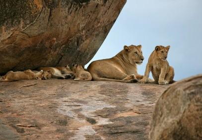 6-Day Serengeti Tented Camp Safari