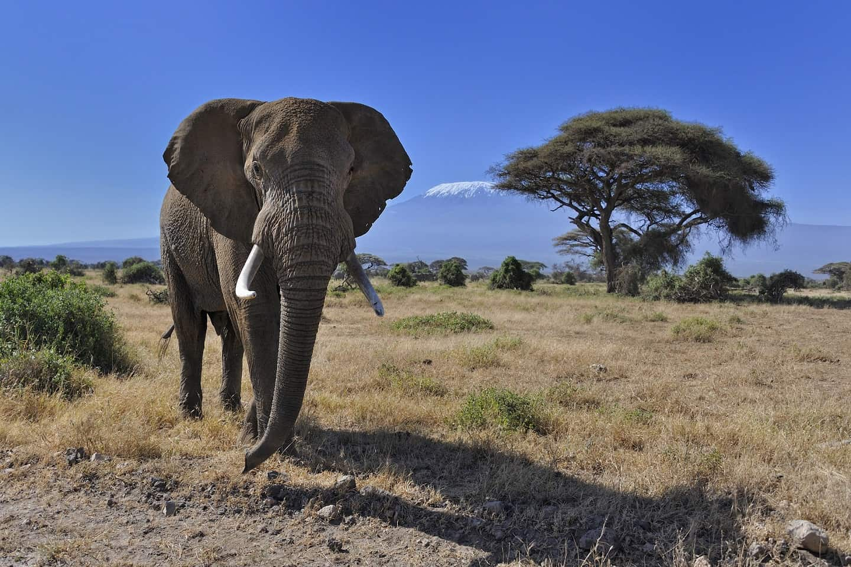 Amboselinpattraction 4