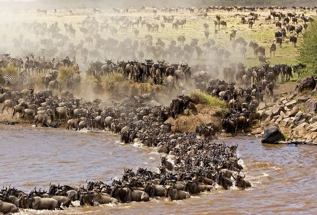 Animals Migration Mara