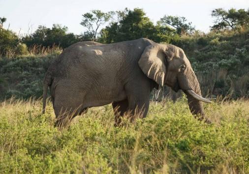Burigi Chato Safaris Co. Ltd Serengeti Norongoro Safari Best Tour Agency Company Operator In Moshi Arusha Tanzania Africa) (1)