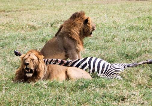 Burigi Chato Safaris Co. Ltd Serengeti Norongoro Safari Best Tour Agency Company Operator In Moshi Arusha Tanzania Africa) (139)